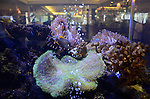 aquarium at Seascape Resort