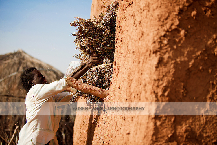 In the Fulani village of Jolooga in northern Burkina Faso, sorghum is harvested and stored in a grainery.