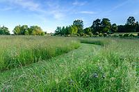 France, Maine-et-Loire (49), Brissac-Quincé, château de Brissac, jeu d'allées dans la prairie