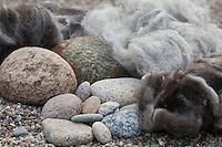 Filz-Stein-Trolle, schöne Steine und Naturwolle als Materialien, Steine werden mit gefilzter Wolle, Filz geschmückt, Mütze aus Filzwolle, Steinmännchen als Gartenschmuck im Beet, Trolle mit Filzmütze