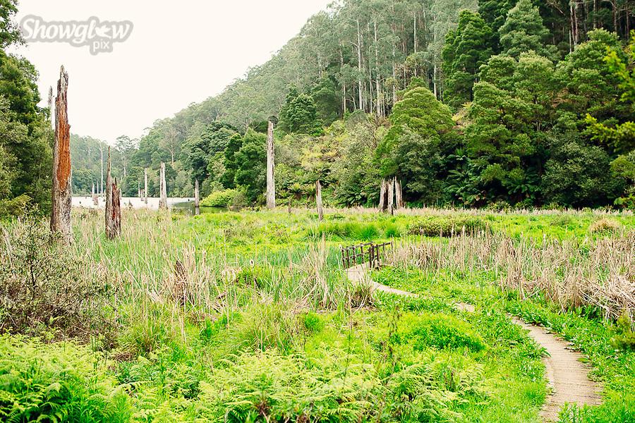 Image Ref: CA716<br /> Location: Lake Elizabeth, Victoria<br /> Date of Shot: 15.09.18