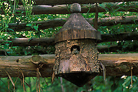 Toad enjoys new digs after moving in to an abandoned bird house high up on a garden arbor giving him a great view and of protection