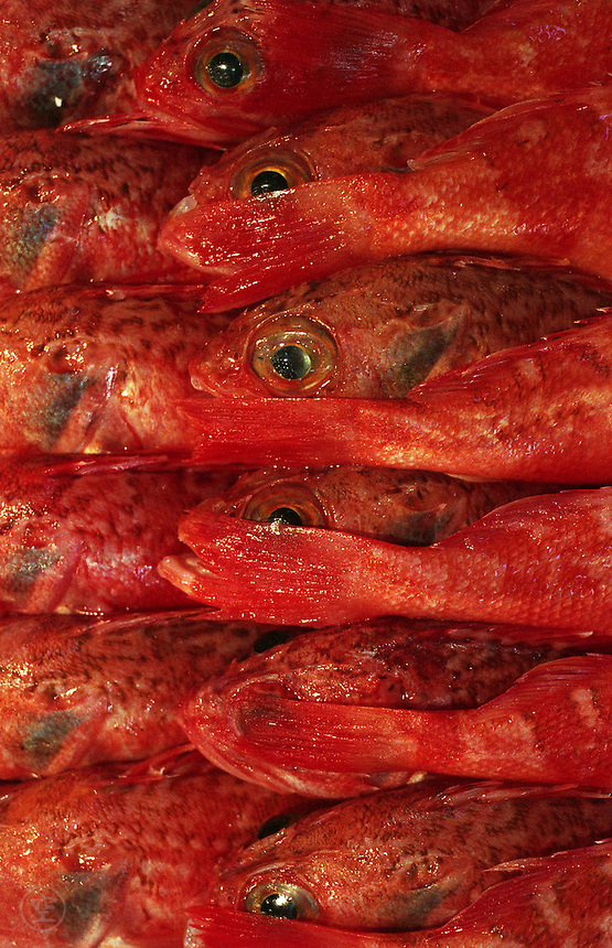 Small red snapper for sale in rows at the Tsukiji Fish Markets, Tokyo, Japan