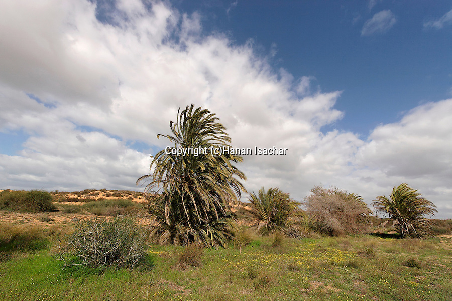 Israel, Southern Coastal Plain. The Garden at Ashdod Sand Dune Park