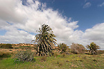 Israel, Southern Coastal Plain. The Garden at Ashdod Sand Dune Park