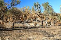 Burned Oak Woodland, Fort Hunter Leggitt