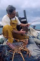 Europe/Espagne/Baléares/Minorque/Biniancolla : M. Sastre pêcheur de retour de la pêche à la langouste