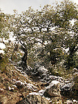 Corsica under snow in october