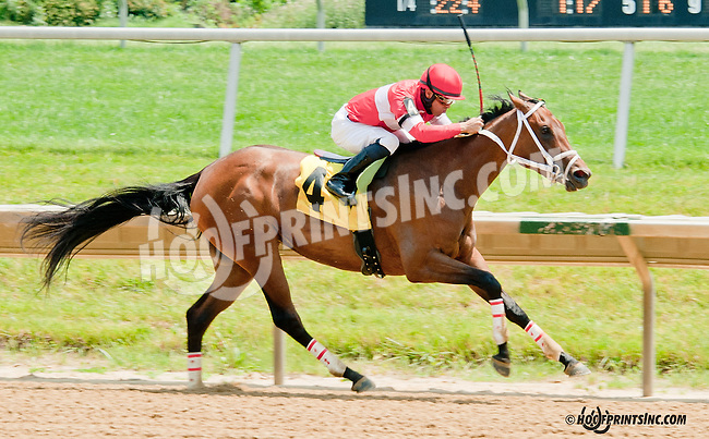Tuatara winning at Delaware Park on 6/26/13