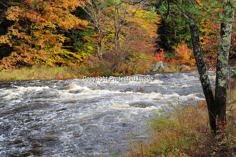 Whitewater on the Ashuelot River during Fall Season in Gilsum, New Hampshire USA