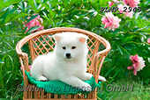 Marek, ANIMALS, REALISTISCHE TIERE, ANIMALES REALISTICOS, dogs, photos+++++,PLMP2945,#a#, EVERYDAY