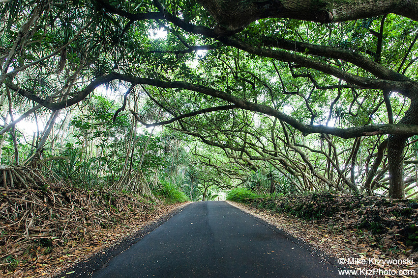 Small scenic road leading through green foliage in Puna, Big Island