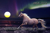 Bob, ANIMALS, REALISTISCHE TIERE, ANIMALES REALISTICOS, horsecollages, photos+++++,GBLA3672,#a#, EVERYDAY ,puzzle,puzzles