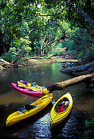 Kayaks floating on a fork off the Wailua River are tied near the trailhead that leads to Secret Falls.