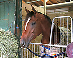 Maximum Security celebrates his birthday at Monmouth Park in Oceanport, New Jersey Photo By Bill Denver/EQUI-PHOTO