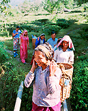 INDIA, West Bengal, women carrying woven baskets filled with tea leaves, Darjeeling