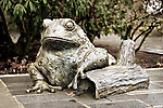 Bronze frog statue at Bellevue Botanical Gardens - closeup desat