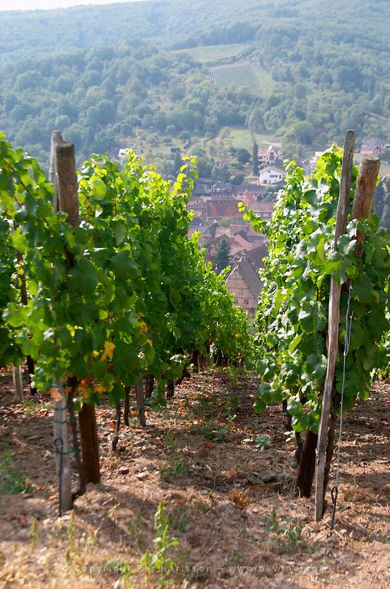 riesling vineyard kastelberg gc andlau alsace france