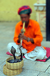 Indian snake charmer.  (NOTE: Selective focus on cobras)