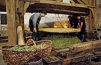 Europe/France/89/Yonne/ Chablis: Pressoir à Abbattage du XVIII aux Caves de l 'Obédiencerie du Domaine Laroche -Chablis AOC [Non destiné à un usage publicitaire - Not intended for an advertising use]