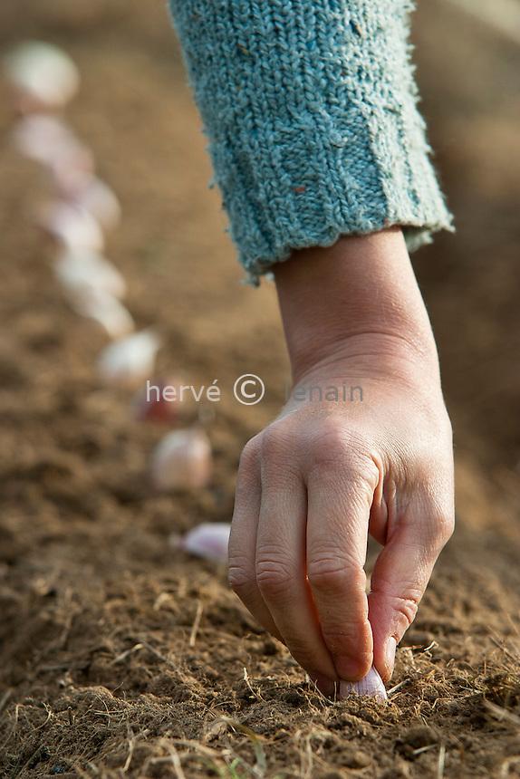 Plantation d'ail 'Rose de Lautrec' // Plantation of garlic ' Rose de Lautrec '