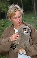 Uhu, Jungvogel soll beringt werden, Bubo bubo, eagle owl