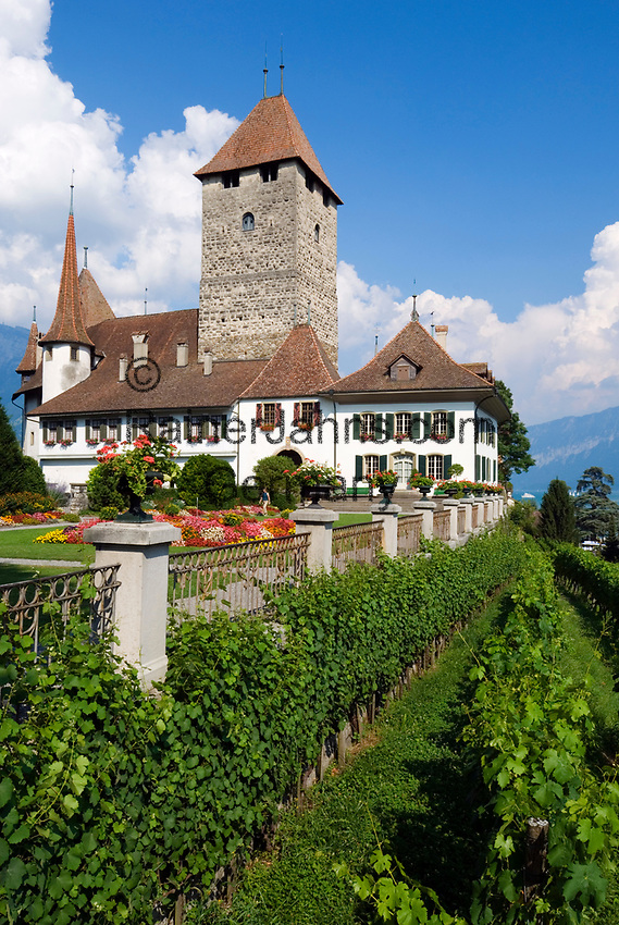 CHE, Schweiz, Kanton Bern, Berner Oberland, Spiez: Schloss Spiez am Thunersee | CHE, Switzerland, Bern Canton, Bernese Oberland, Spiez: castle Spiez at Lake Thun