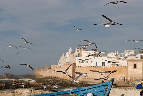 Essaouira, Morocco. Seagulls over the port.