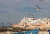 Essaouira, Morocco. Seagulls over the port.