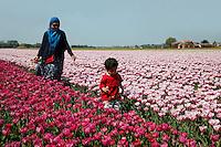 Toeristen uit het Verre Oosten lopen in de bollenvelden