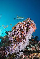 Maldives coral reef photos