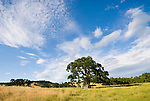 Heritage oak and headstones; clouds, Upper Rancheria cemetery in the Amador County, Calif., foothills in late spring.