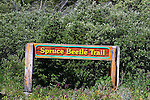 SPRUCE BEETLE TRAIL, THE YUKON, CANADA.