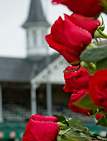 LOUISVILLE, KY - MAY 06: Roses on Kentucky Derby Day at Churchill Downs on May 6, 2017 in Louisville, Kentucky. (Photo by Sue Kawczynski/Eclipse Sportswire/Getty Images)