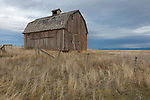 Idaho, North Central, Idaho County, Grangeville, Cottonwood. An old barn on the high plains in winter.
