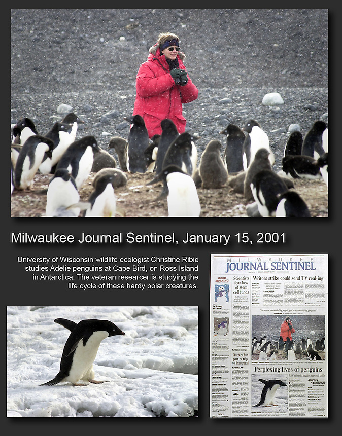 University of Wisconsin wildlife biologist Christine Ribic studies Adelie penguins at Cape Bird, on Ross Island, Antarctica. The veteran researcher is studying the life cycle of these hardy polar creatures. Ernie Mastroianni story and photos.