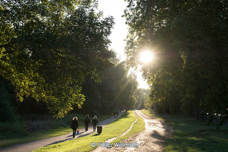 Late afternoon sun on the bridleway, Hyde Park, London.