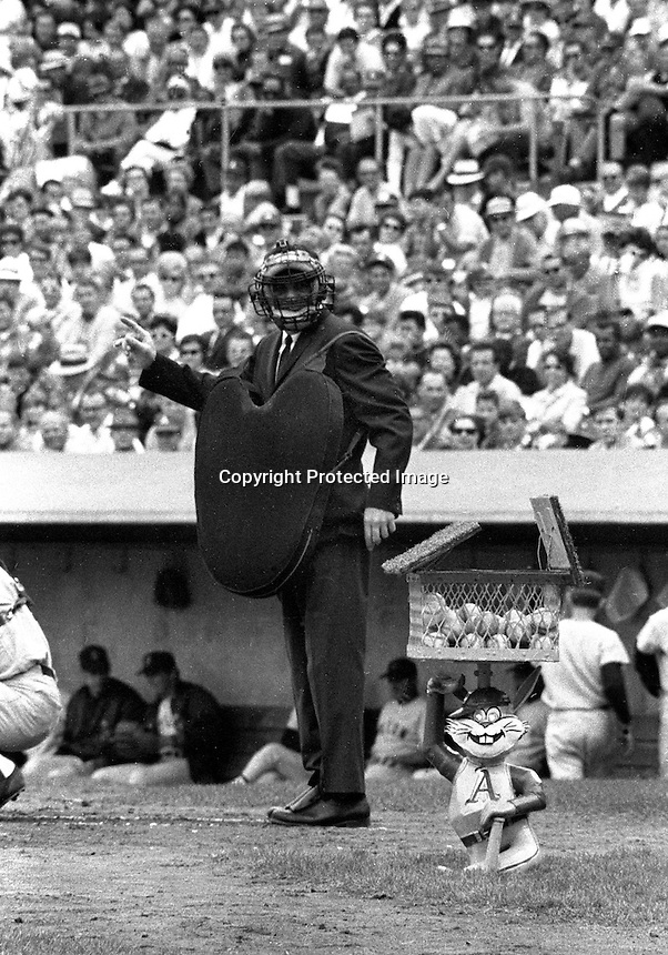 Oakland Athletics owner Charlie Finley's mechanical rabbit comes out of the ground to supply the umpire with new baseballs. (1972 photo by Ron Riesterer)