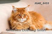 Marek, ANIMALS, REALISTISCHE TIERE, ANIMALES REALISTICOS, cats, photos+++++,PLMP6455,#a#, EVERYDAY