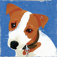 Portrait of Jack Russell Terrier puppy dog ExclusiveImage