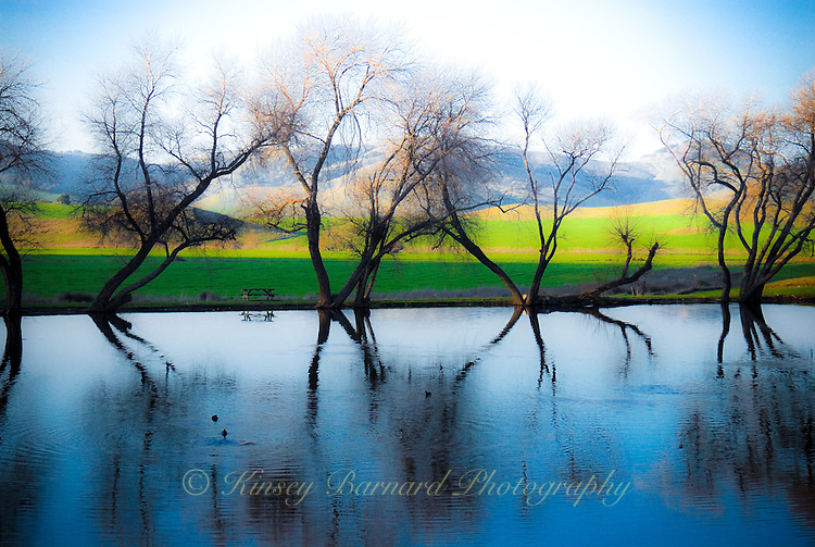 """MAGICAL POND""<br />