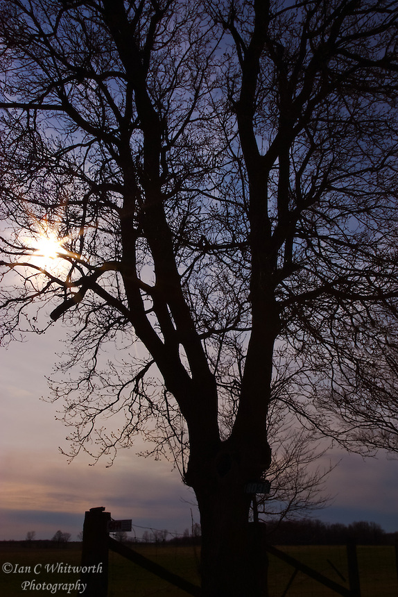 A tree at the edge of a farm is silhouetted against a late afternoon sun and sky