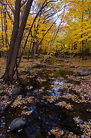 Hammel Creek flows lazily through the autumn forest at Hammel Woods Forest Preserve, Will County, Illinois