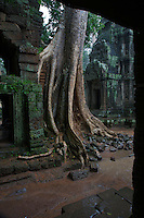 Ta Prohm Temple Cambodia