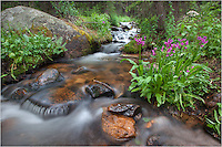 Rolling down from the Continental Divide, this cold, snow fed stream feeds the wildflowers that grow in Colorado's high country. This image comes from Grand County up near Berthoud Pass at about 11,000 feet.