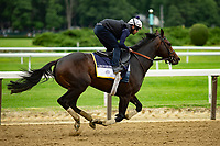 ELMONT, NY - JUNE 07: Gronkowski gallops around the track as horses prepare Thursday for the 150th running of the Belmont Stakes at Belmont Park on June 7, 2018 in Elmont, New York. (Photo by Kaz Ishida/Eclipse Sportswire/Getty Images)