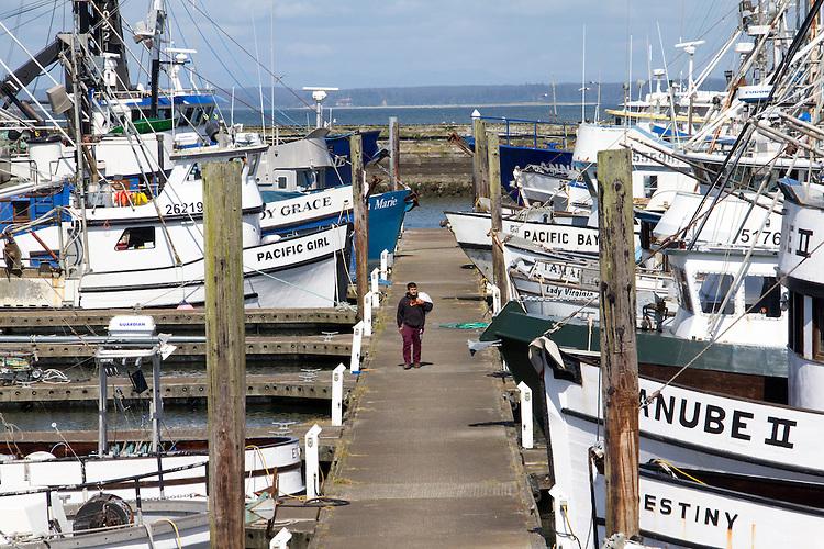 Washington Coast, Westport, commercial fishing boats, Port of Westport, Grays Harbor County, Southwest Washington, Washington State, Pacific Northwest, USA,
