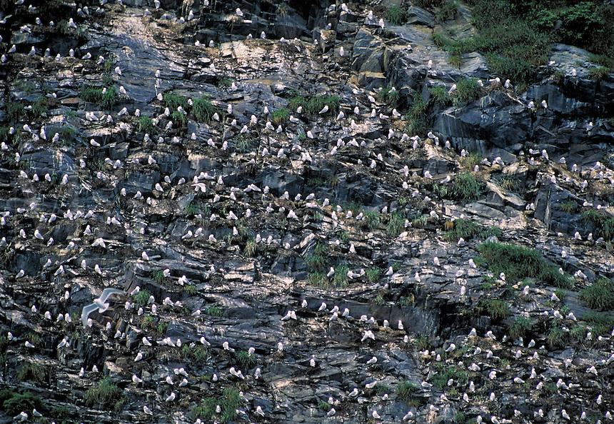 Sea birds perched on rocky cliff, Alaska