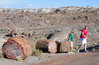 Navajo County, Arizona – Two park visitors walk past some petrified logs on a paved trail of the Crystal Forest area. The Petrified Forest National Park in northeastern Arizona remains one of the most popular attractions in the United States. The park attracts thousands of visitors a year for the large amount of petrified wood sediments from ancient trees. Photo by Eduardo Barraza © 2014