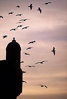 Afrique/Maghreb/Maroc/Essaouira : Mouettes et échauguette de la skala du port dans la lumière du soir